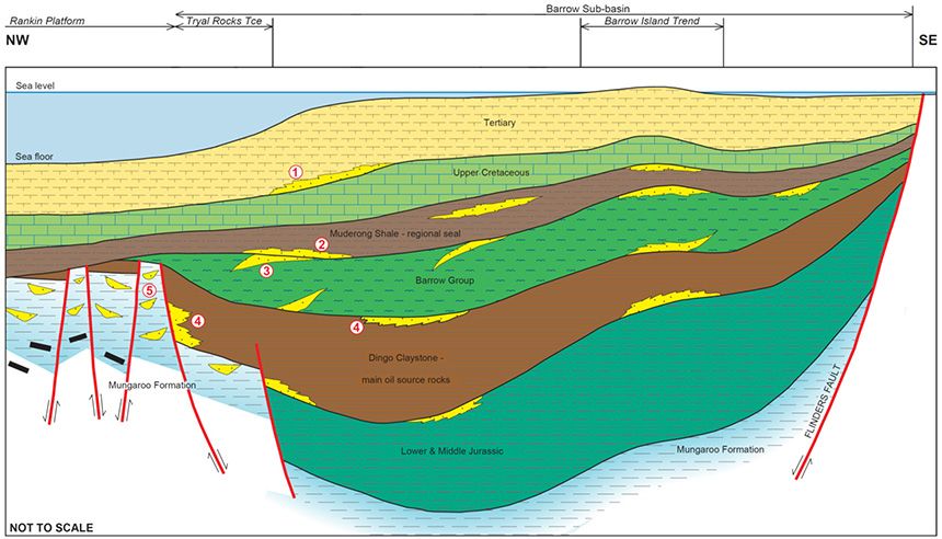 Generalised cross-section of the Carnarvon MegaSurvey area play, GeoScience Australia (2010)